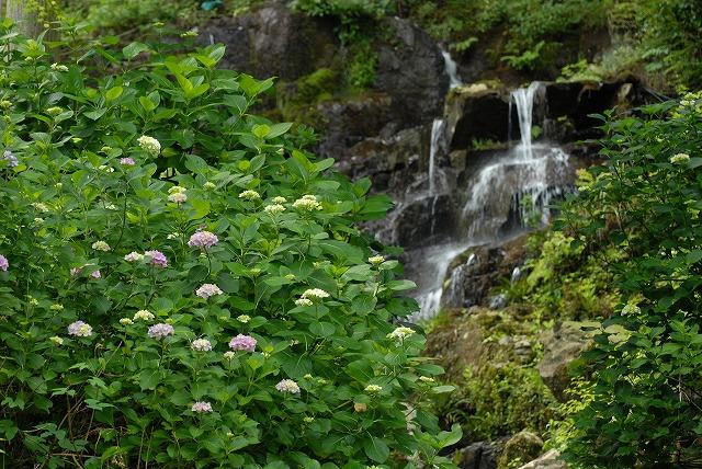 滝と紫陽花3