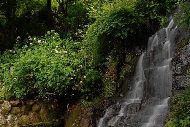 滝と紫陽花5