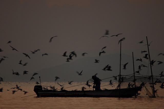 壺網漁とカモメの群れ1
