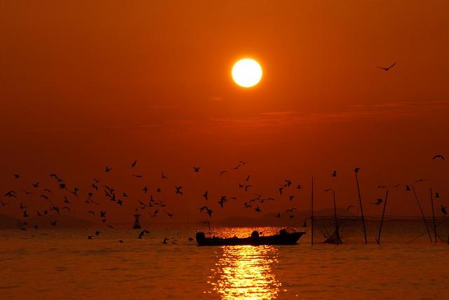 壺網漁に群がる鳥1