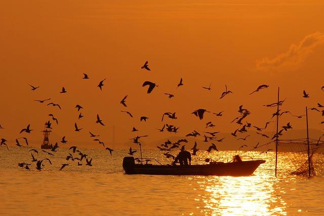 壺網漁に群がる鳥2