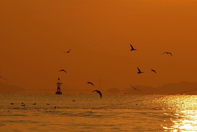 壺網漁に群がる鳥3