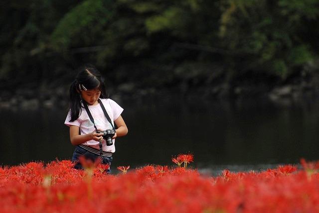 成羽の彼岸花16-2