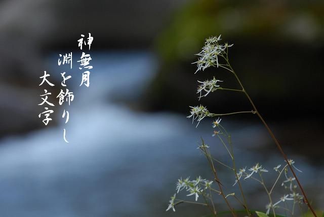大文字草2