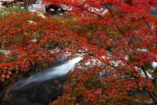 奥津渓の紅葉3