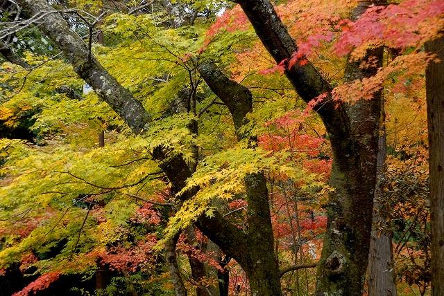 奥津渓の紅葉6