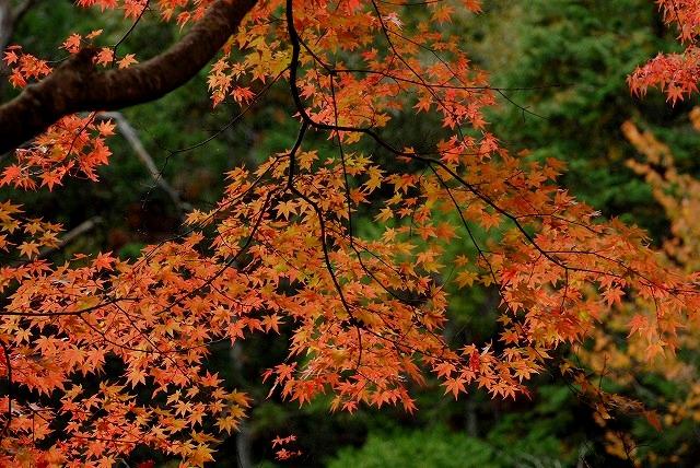 奥津渓の紅葉11