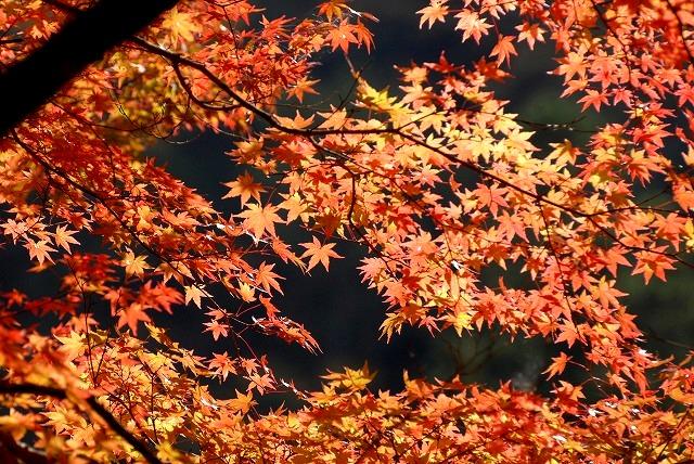 奥津渓の紅葉14