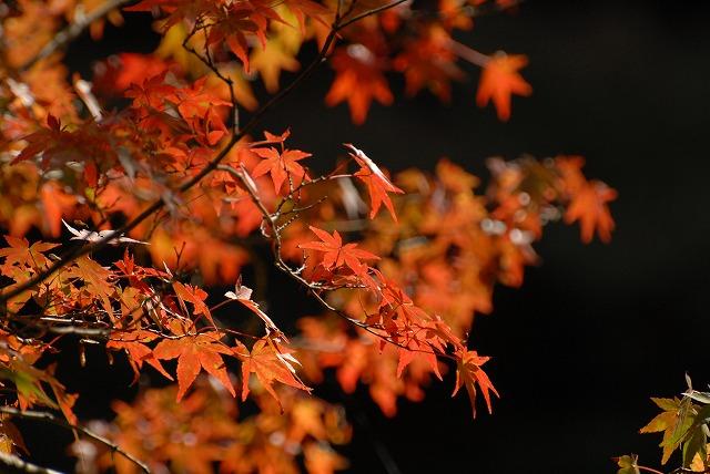 奥津渓の紅葉19