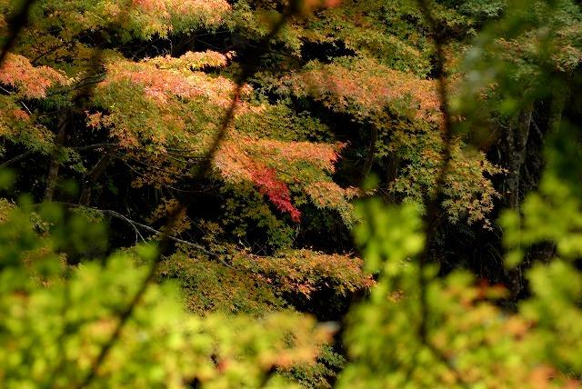 奥津渓の紅葉24