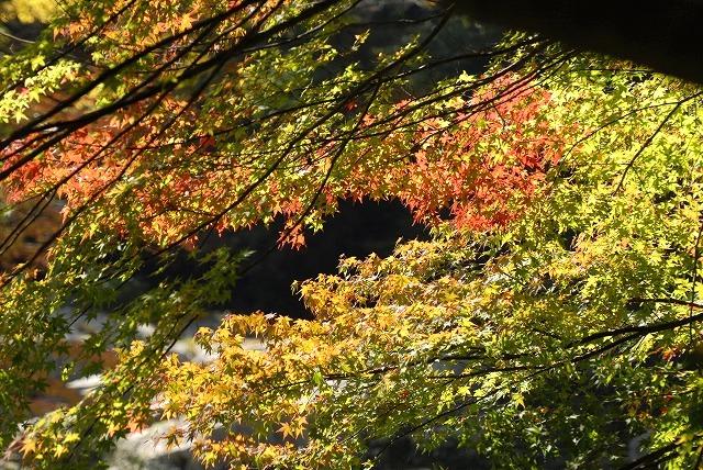 奥津渓の紅葉25