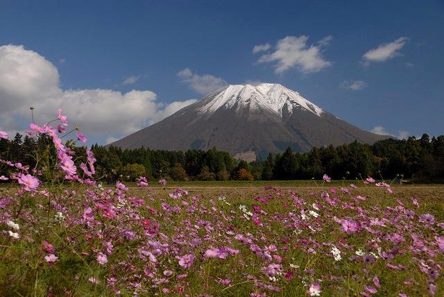 大山とコスモス1
