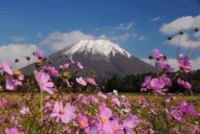 大山とコスモス2