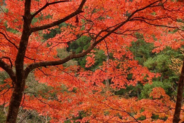 奥津渓の紅葉8
