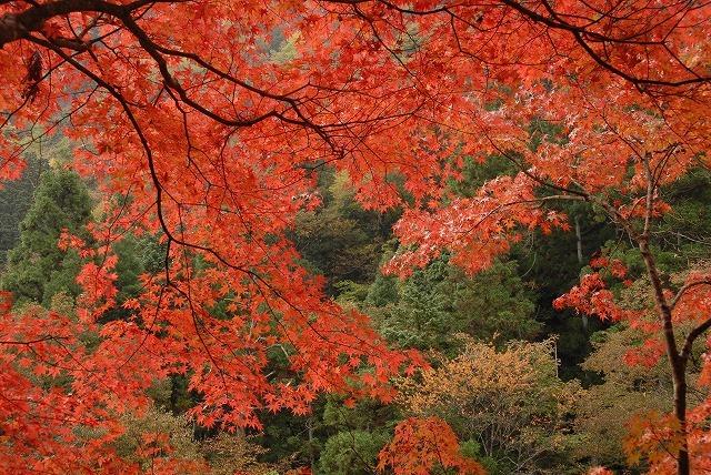 奥津渓の紅葉9