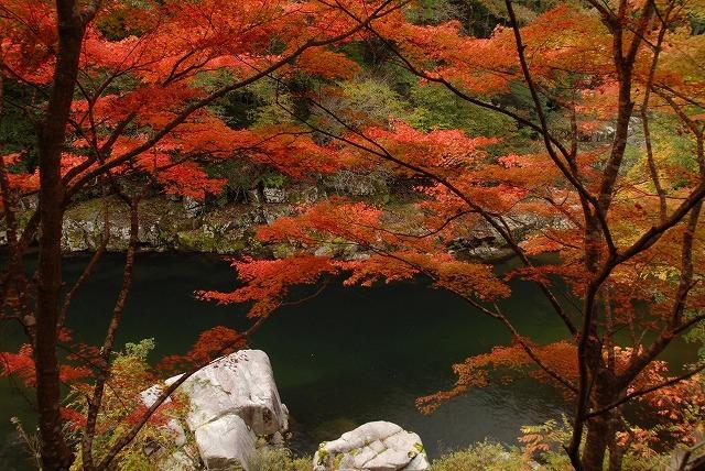 奥津渓の紅葉10