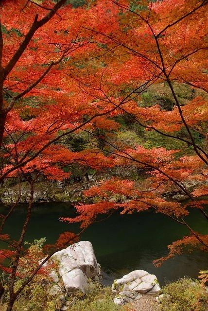 奥津渓の紅葉10-2