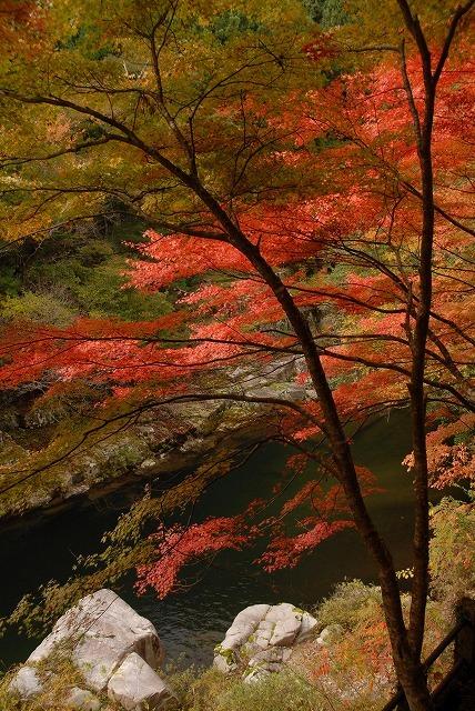奥津渓の紅葉12-2