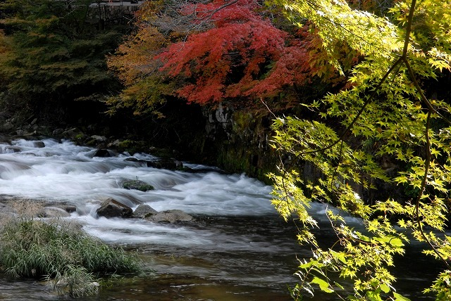奥津渓の紅葉17