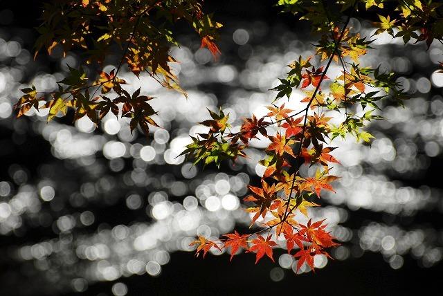 奥津渓の紅葉23