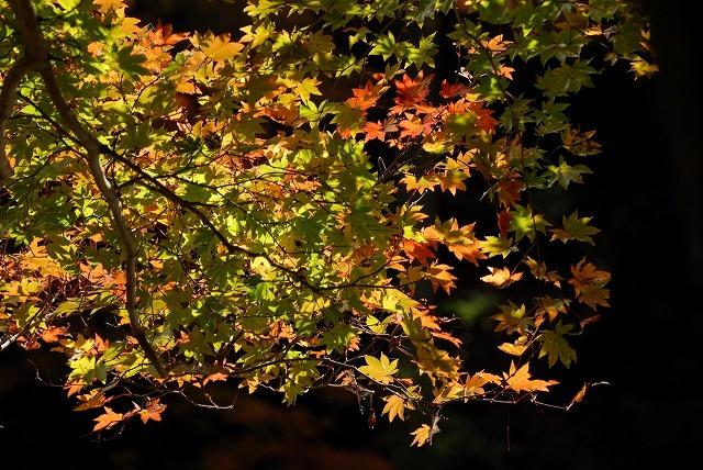 奥津渓の紅葉28