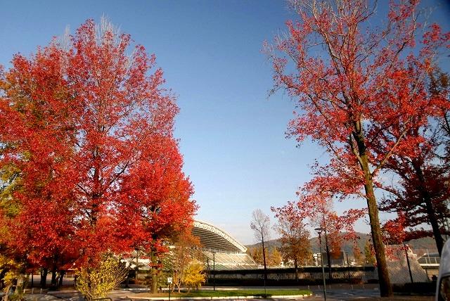 運動公園の紅葉1
