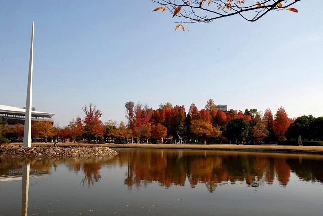 運動公園の紅葉11