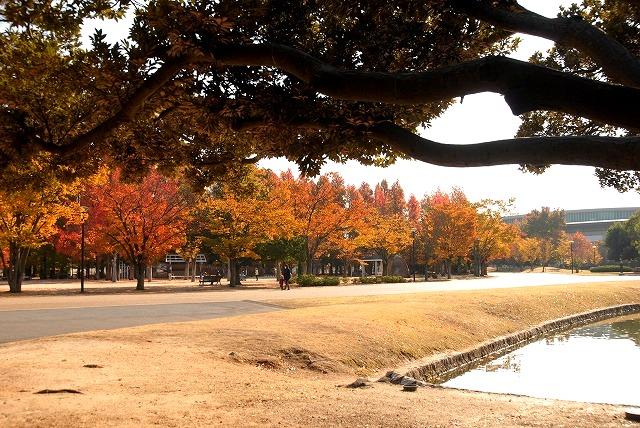 運動公園の紅葉16