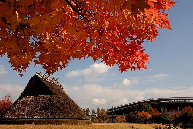 動公園の紅葉22