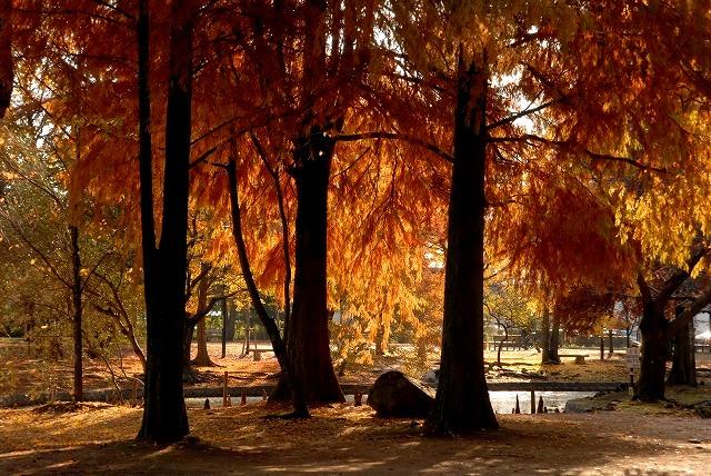 動公園の紅葉32