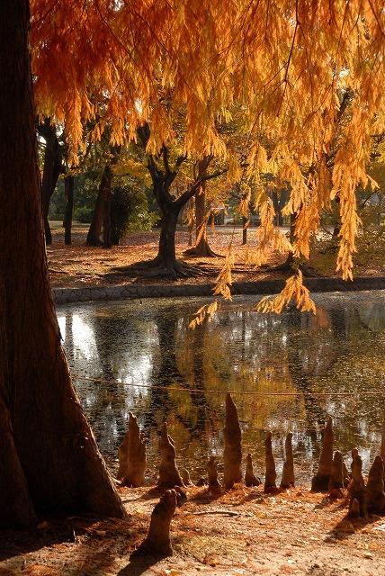 動公園の紅葉34