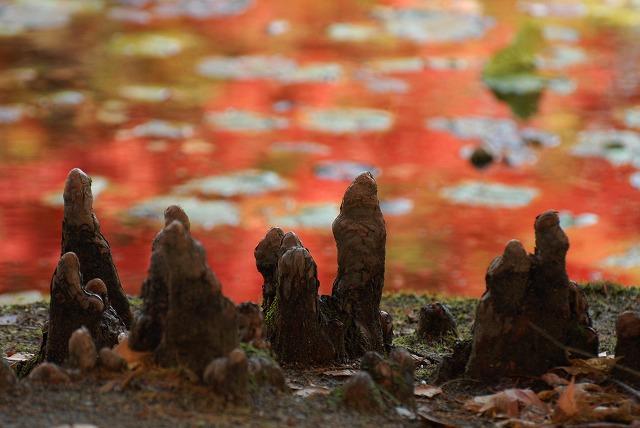動公園の紅葉35