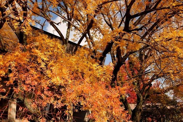 動公園の紅葉36