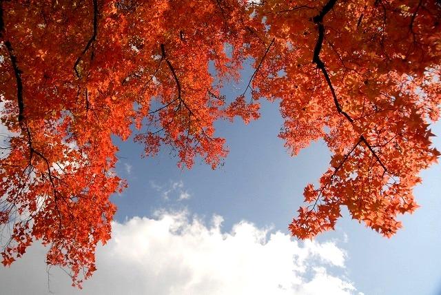 動公園の紅葉39
