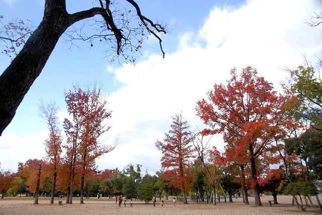 動公園の紅葉46