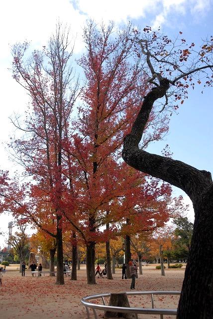 動公園の紅葉47