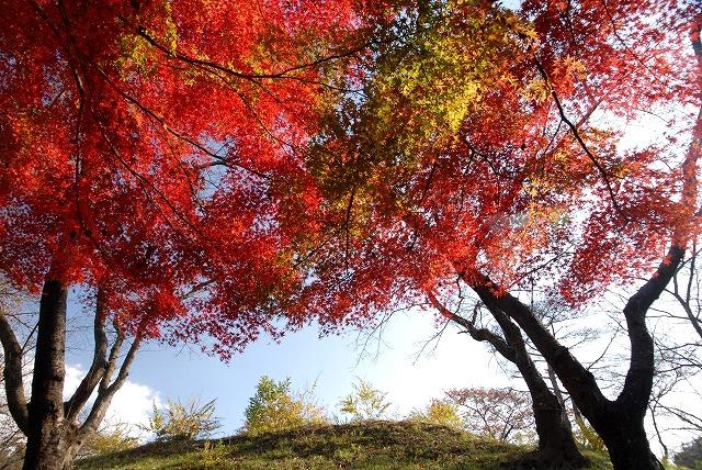 半田山の紅葉2