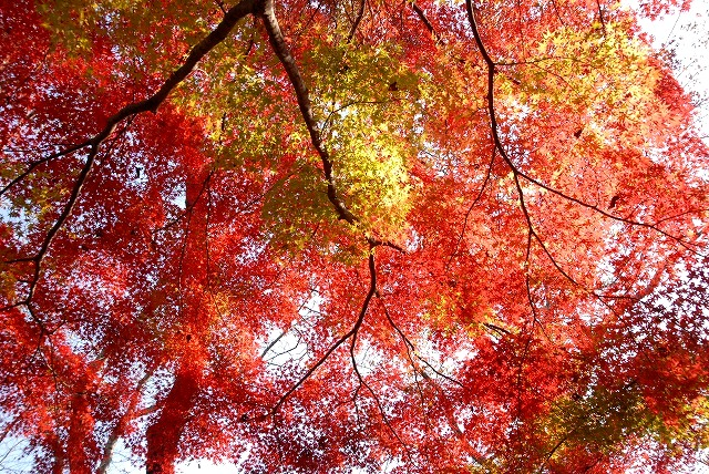 半田山の紅葉3