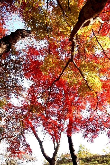 半田山の紅葉4