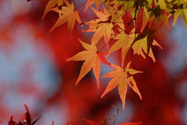 半田山の紅葉8