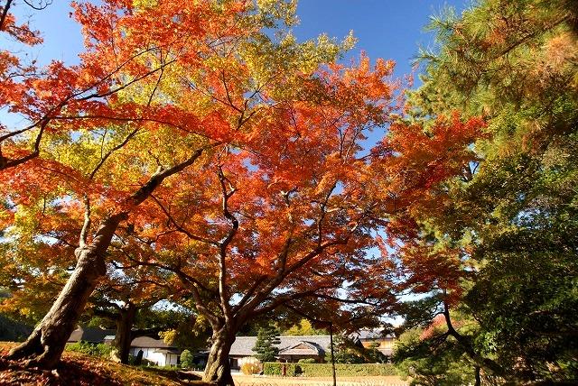 後楽園の紅葉3