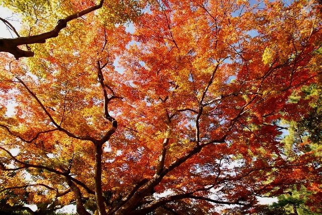 後楽園の紅葉3-2