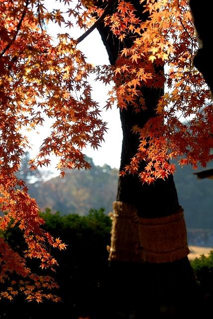 後楽園の紅葉7