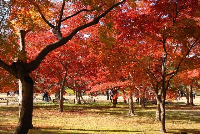 千入の森2