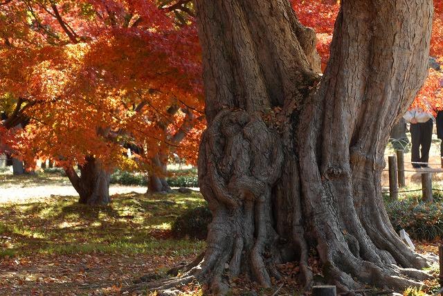 千入の森の大木