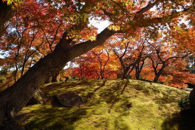 陰陽石と紅葉の裏側1