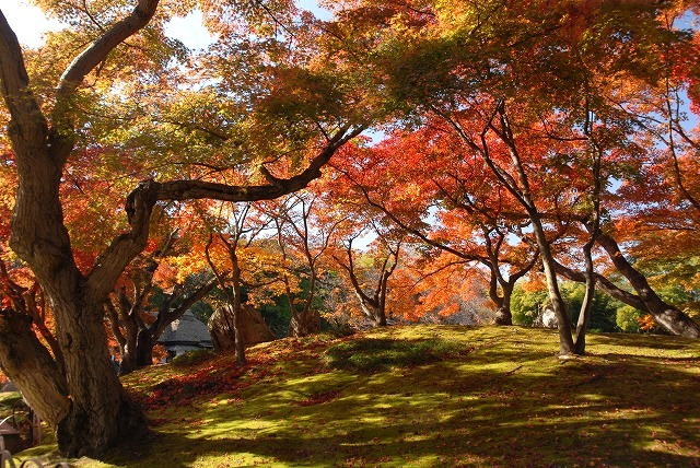 陰陽石と紅葉の裏側2