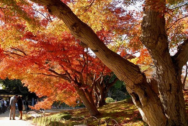 陰陽石と紅葉の裏側3
