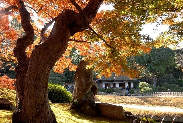 陰陽石と紅葉の裏側4
