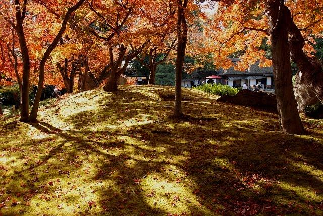 陰陽石と紅葉の裏側5